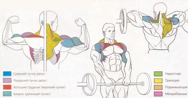 Анатомия тяги штанги к