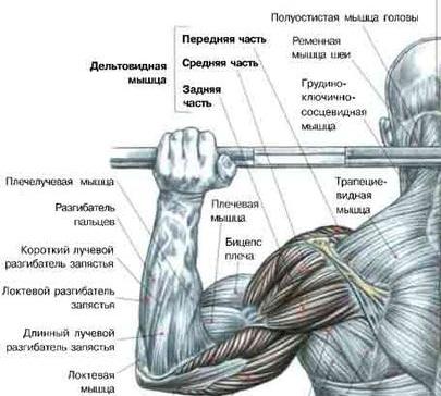 Программа тренинга плеч должна
