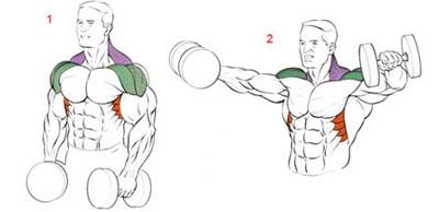 анатомия упражнений на дельты