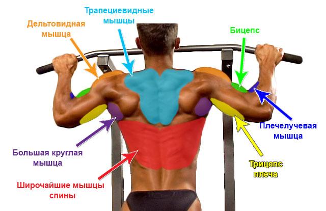 Как в домашних условиях сделать широкую спину