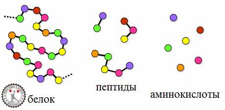 Пептиды похудение туринабол сустанон дека провирон динерик hcga