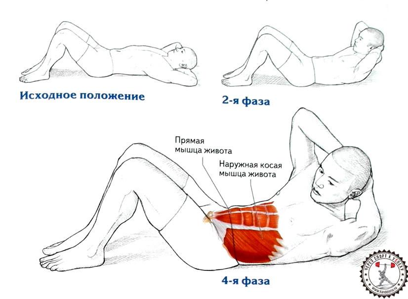 убрать жир со спины тренажерном зале